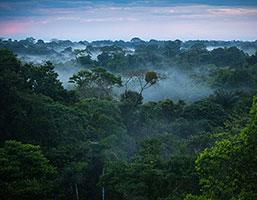 Skovlingen av regnskogen okar